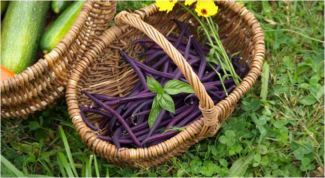 légumes d'un jardin permacole