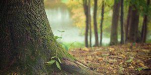 paysage forestier - bienfaits de la marche en forêt