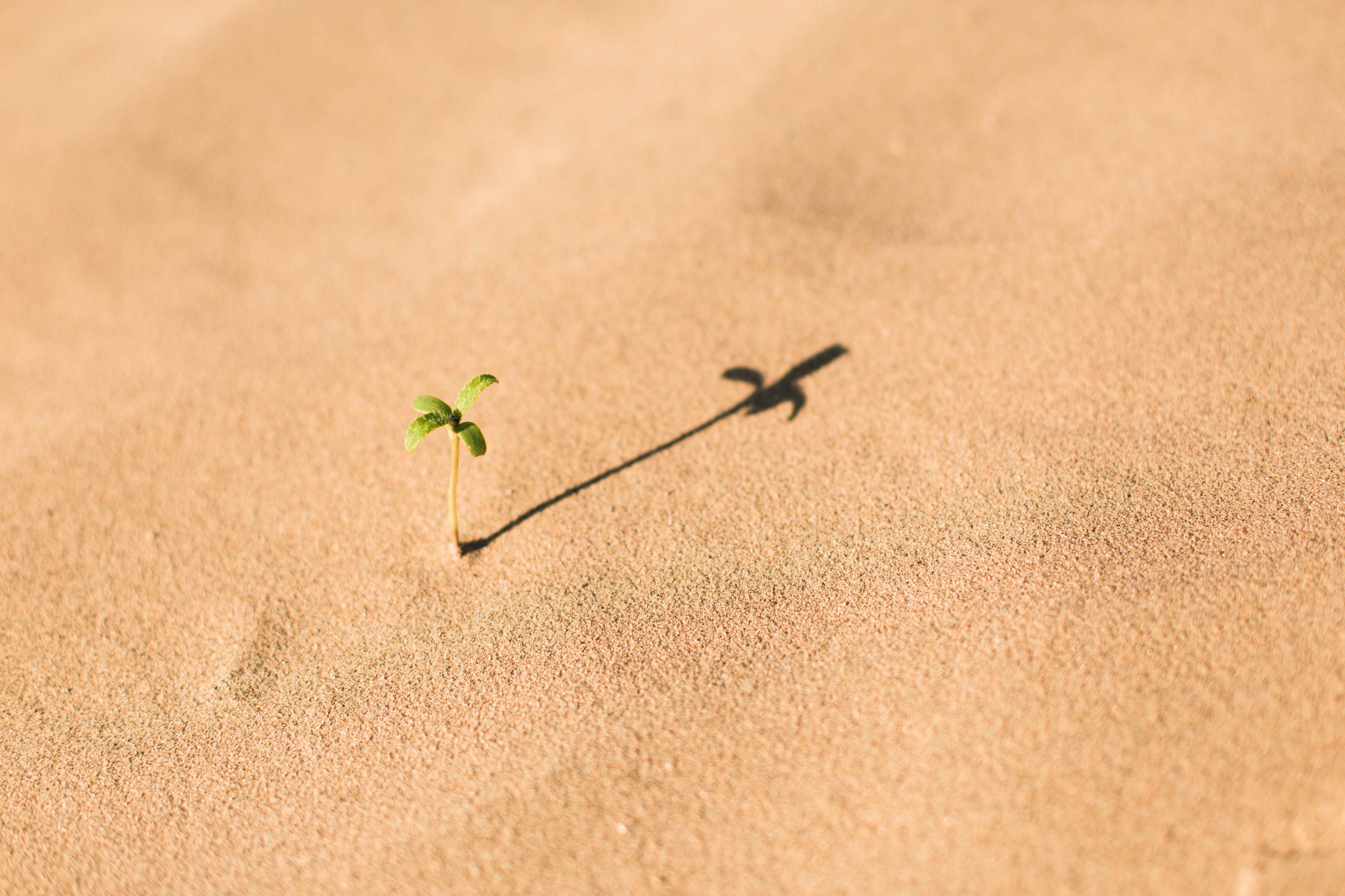 plante dans désert