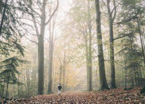 24h pour s'inspirer de la nature pour repenser mon entreprise @ Forêt de Paimpont