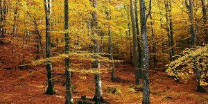 forêt en automne - bienfaits de la marche en forêt